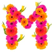 fleur-m1